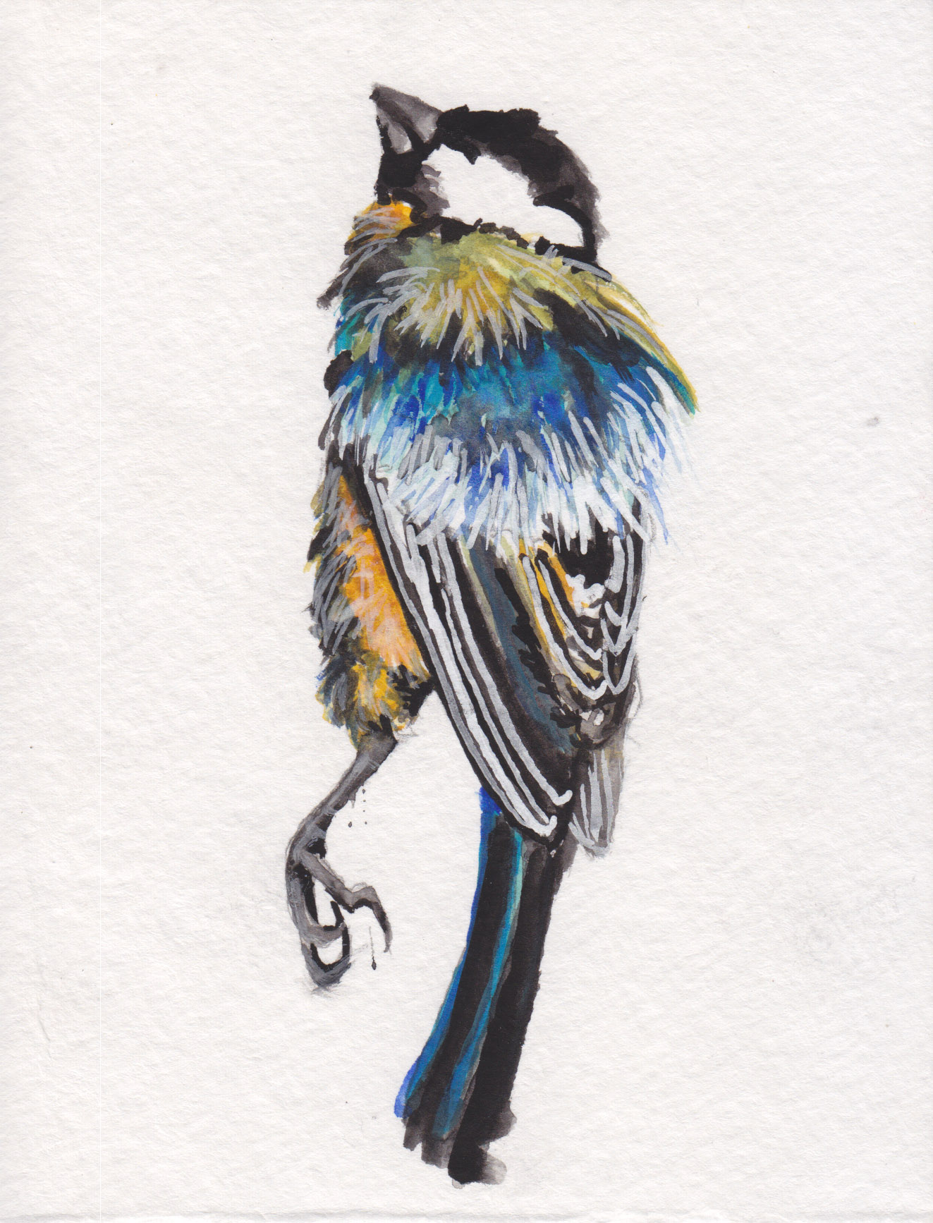 Dunn_wren_watercolor.jpg