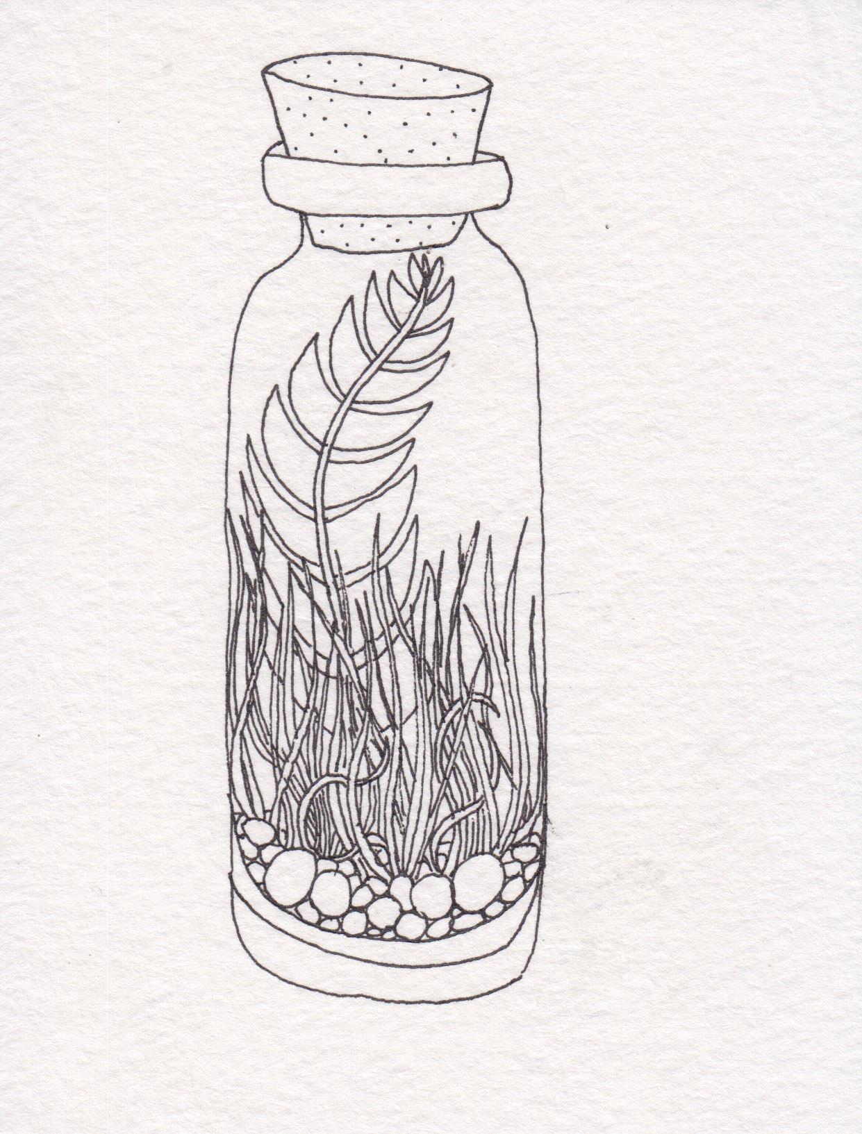 Dunn_Terrarium Drawing_01.jpg