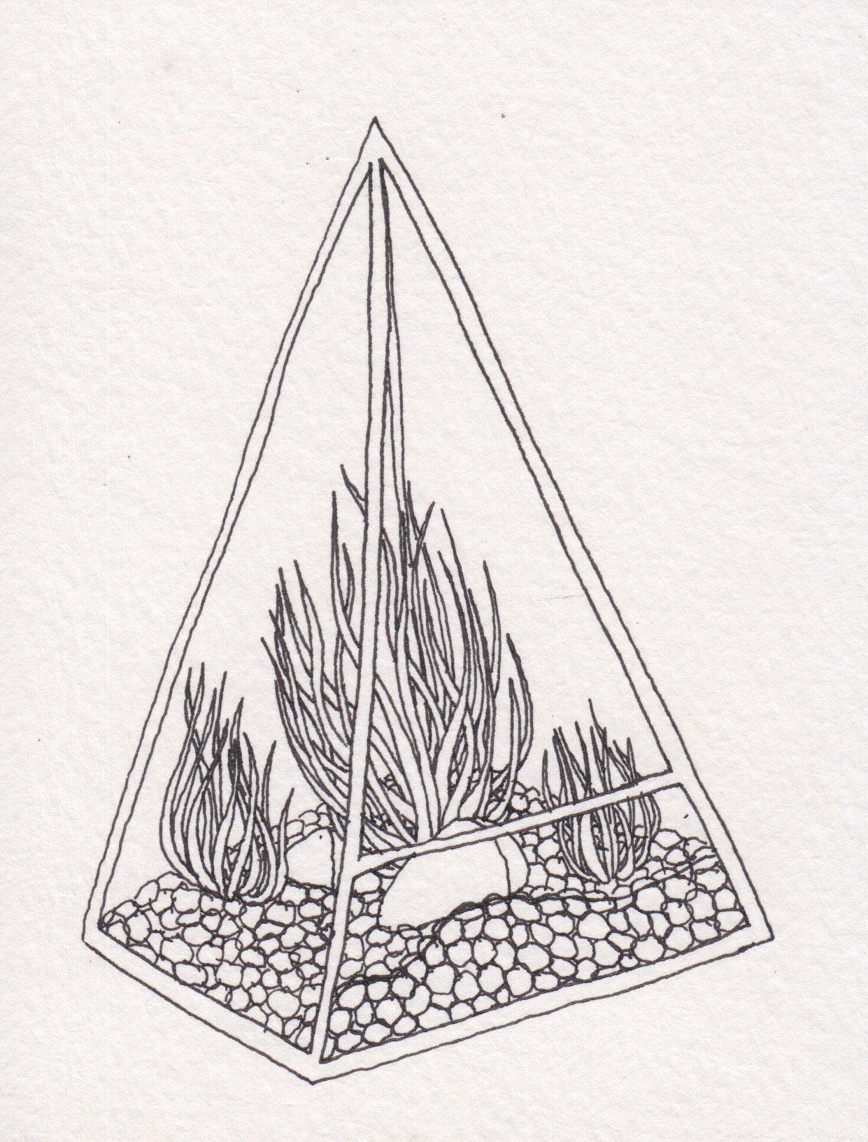 Dunn_Terrarium Drawing_02.jpg