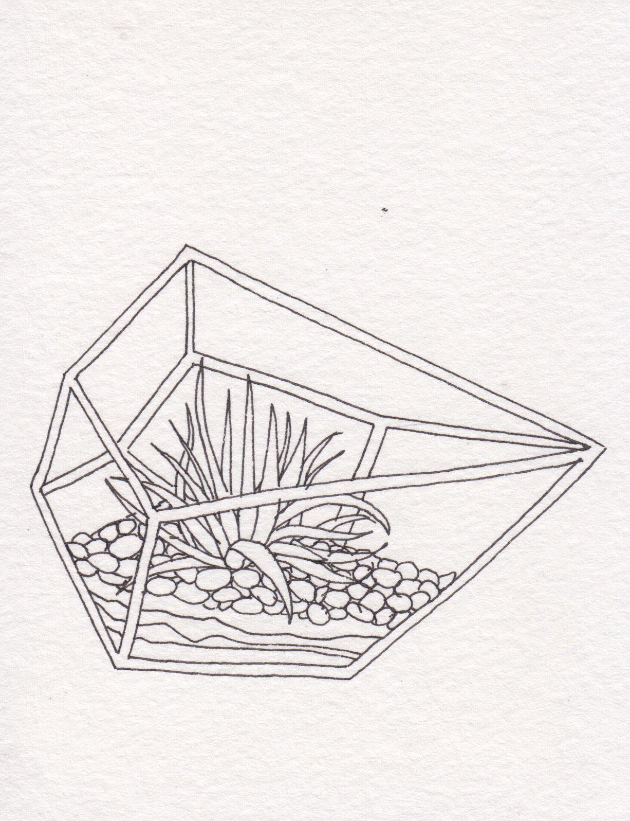 Dunn_Terrarium Drawing_05.jpg