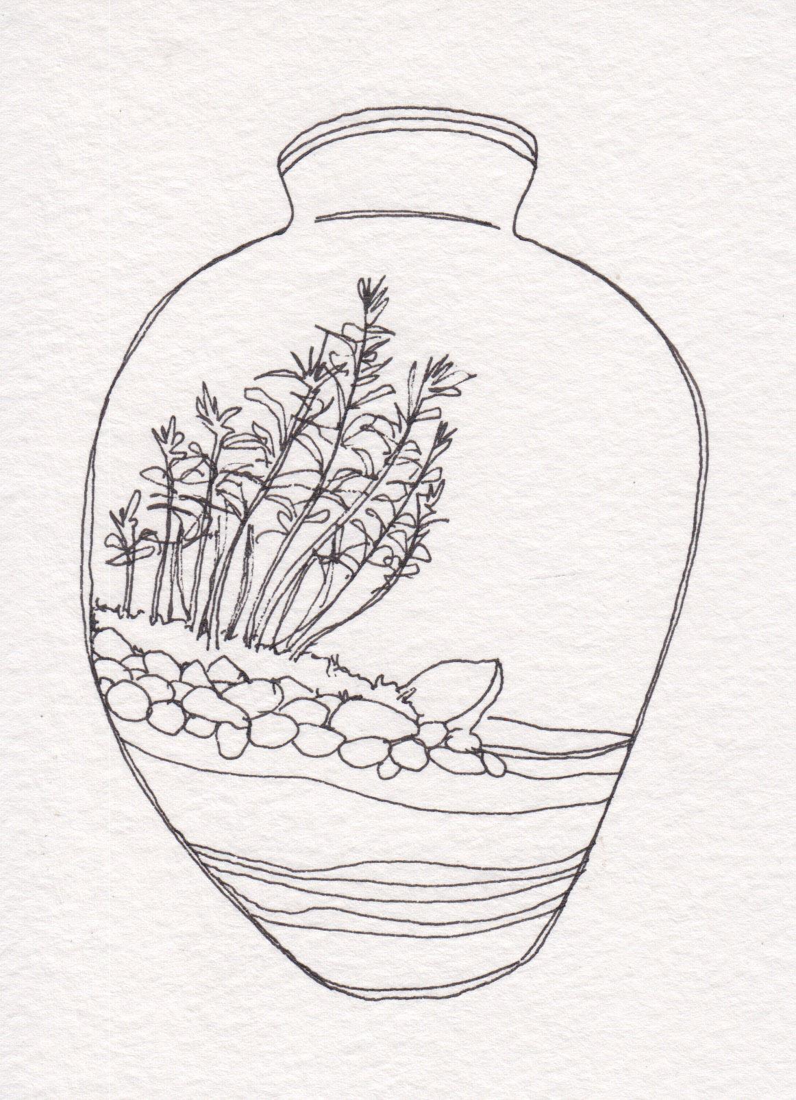 Dunn_Terrarium Drawing_06.jpg