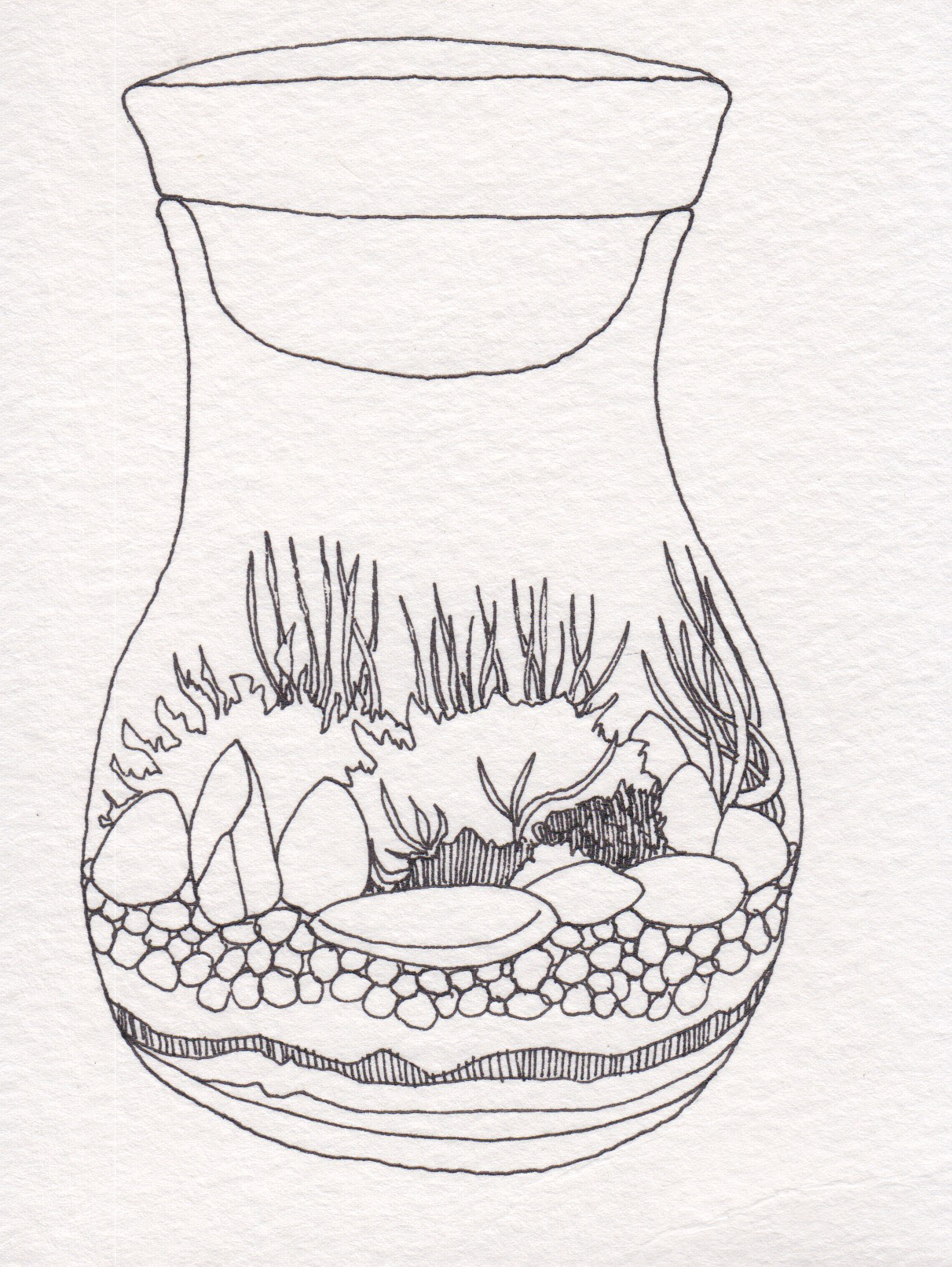 Dunn_Terrarium Drawing_10.jpg