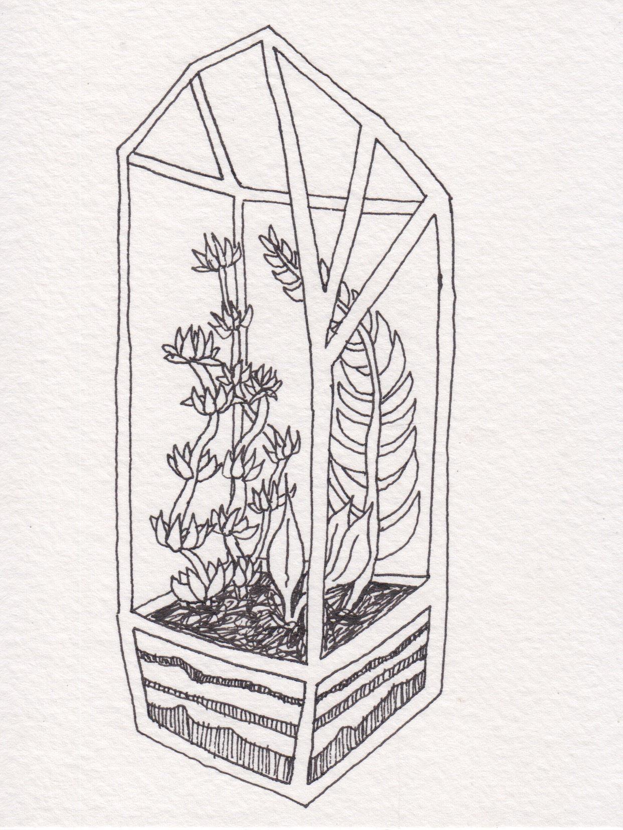 Dunn_Terrarium Drawing_11.jpg