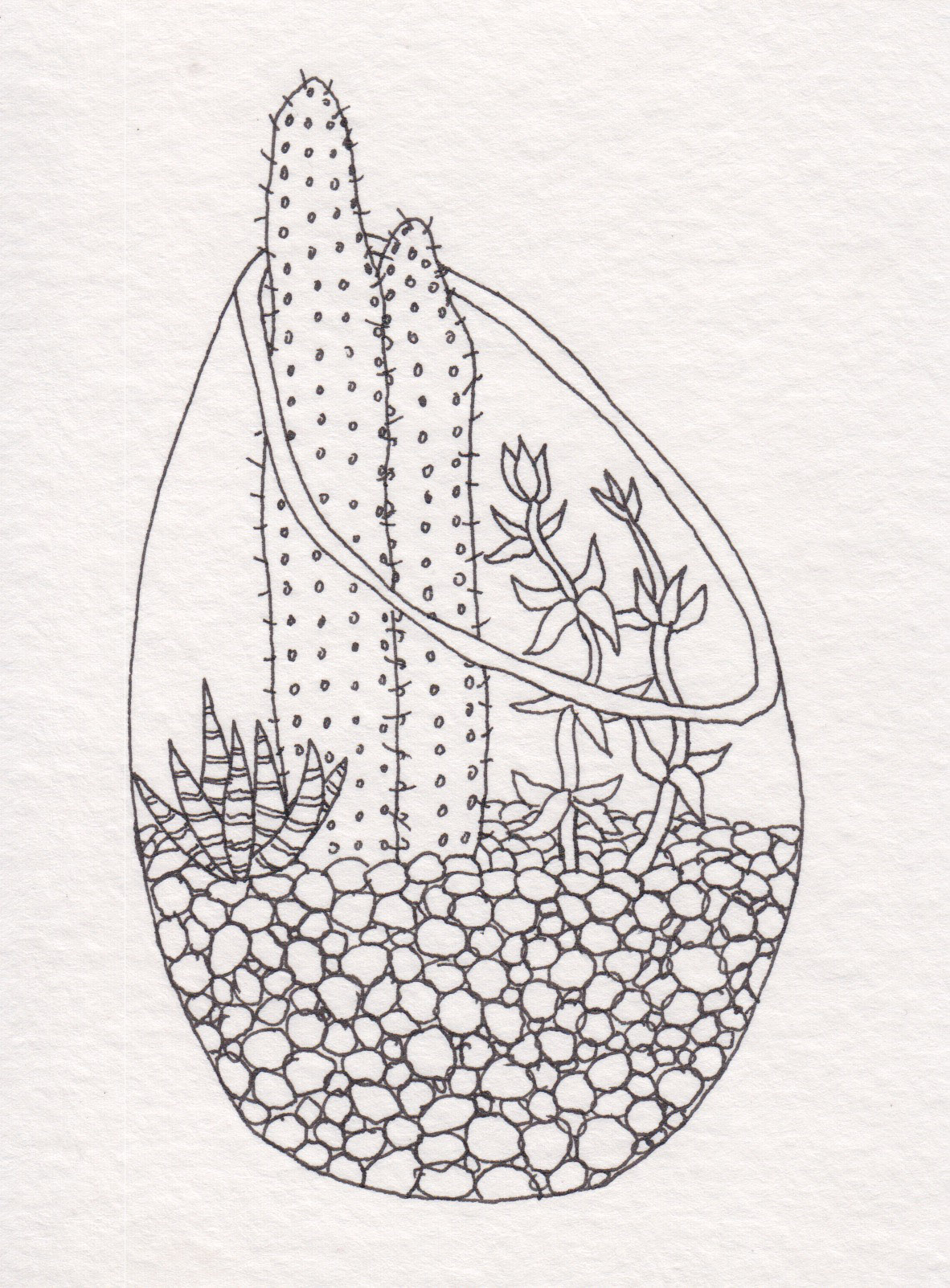 Dunn_Terrarium Drawing_14.jpg
