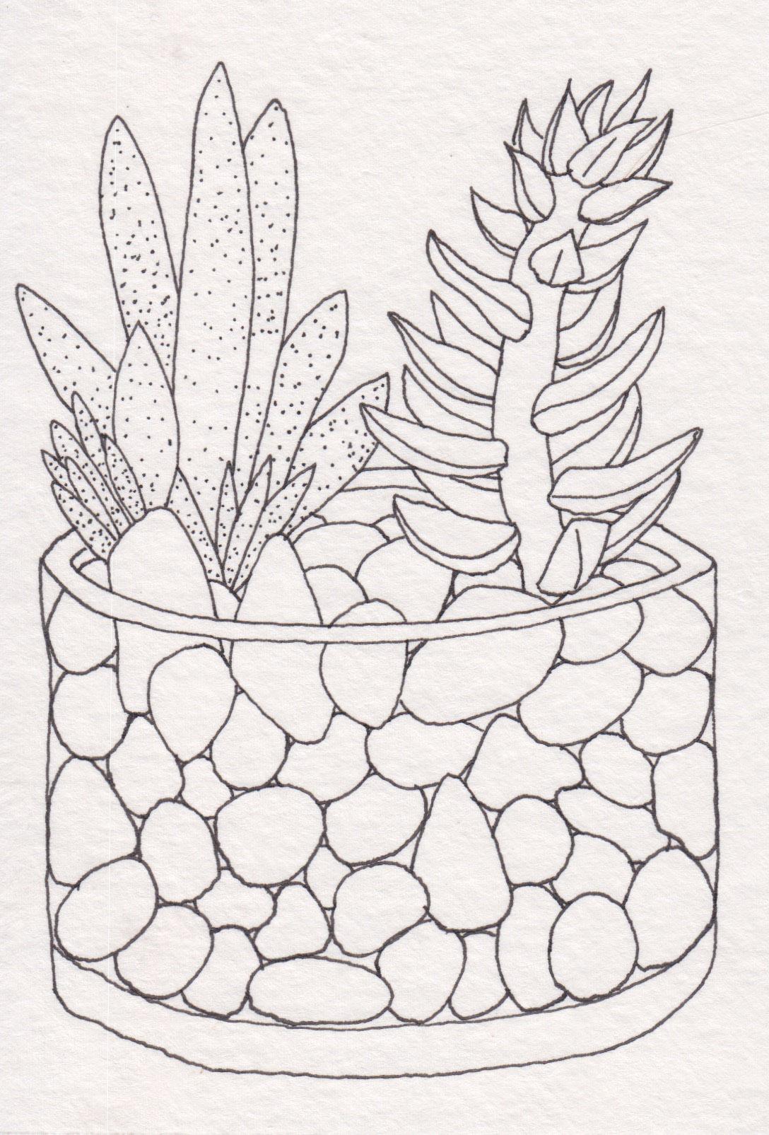 Dunn_Terrarium Drawing_16.jpg
