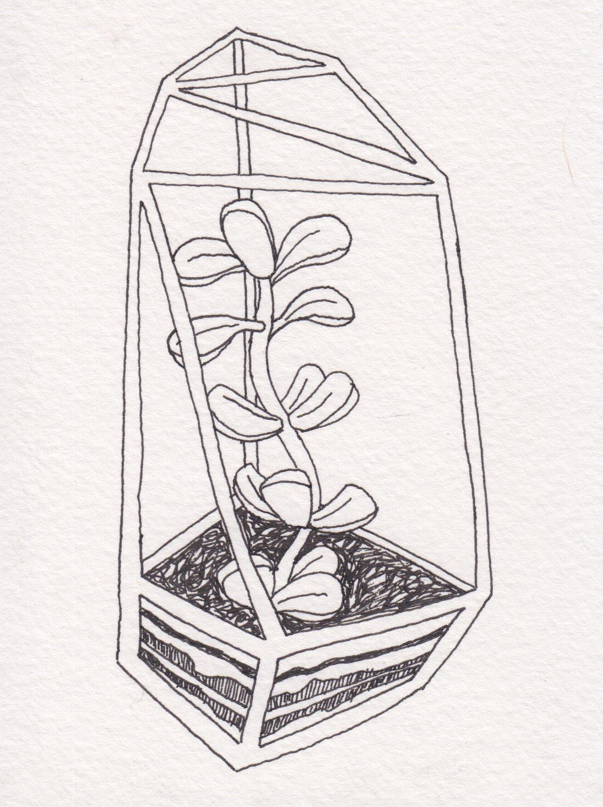 Dunn_Terrarium Drawing_15.jpg