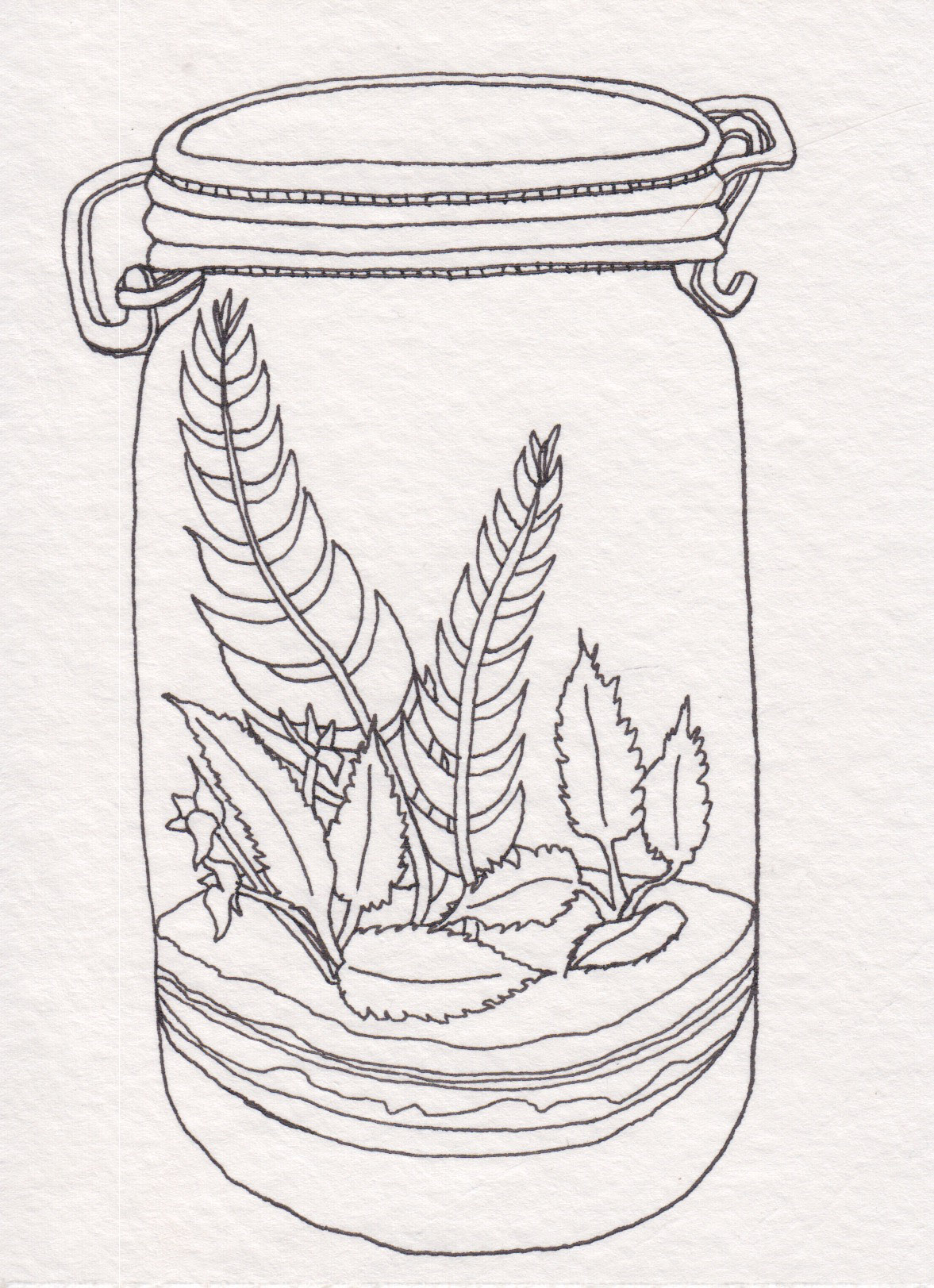 Dunn_Terrarium Drawing_17.jpg