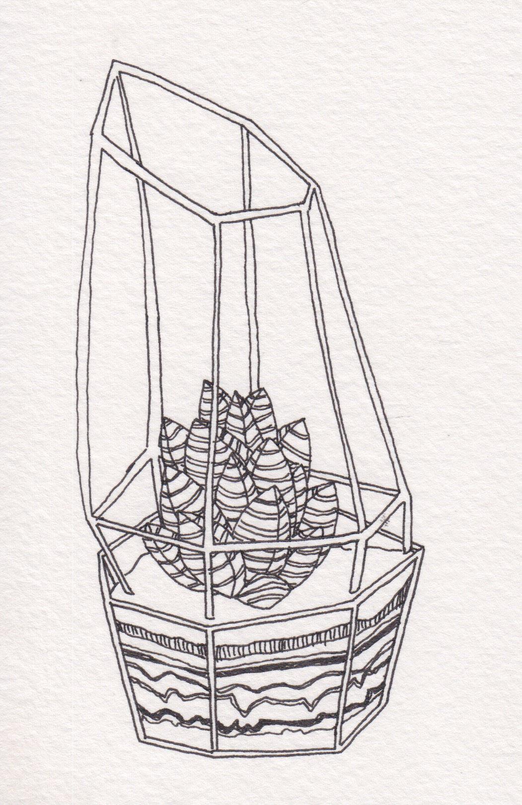 Dunn_Terrarium Drawing_18.jpg