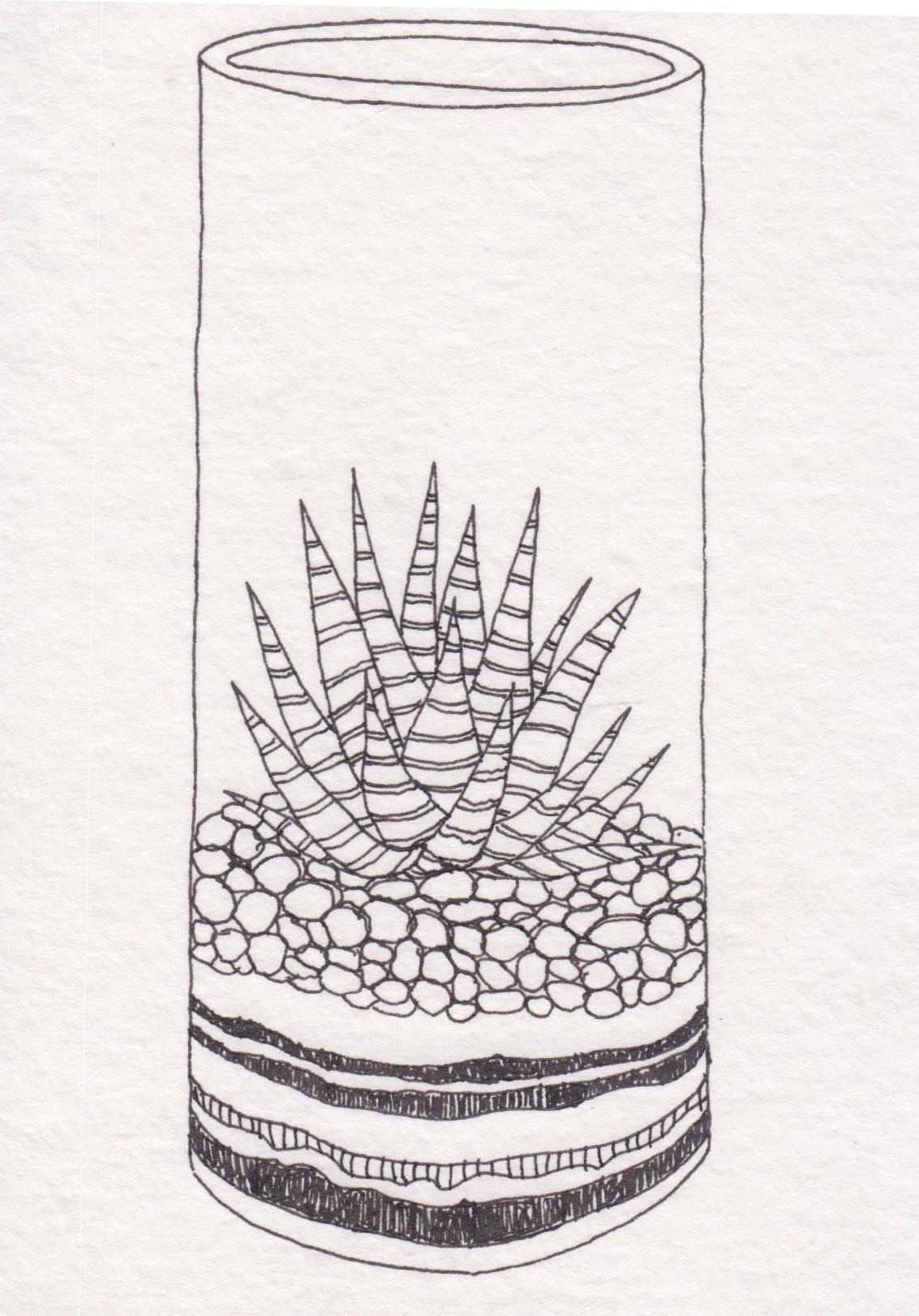 Dunn_Terrarium Drawing_22.jpg