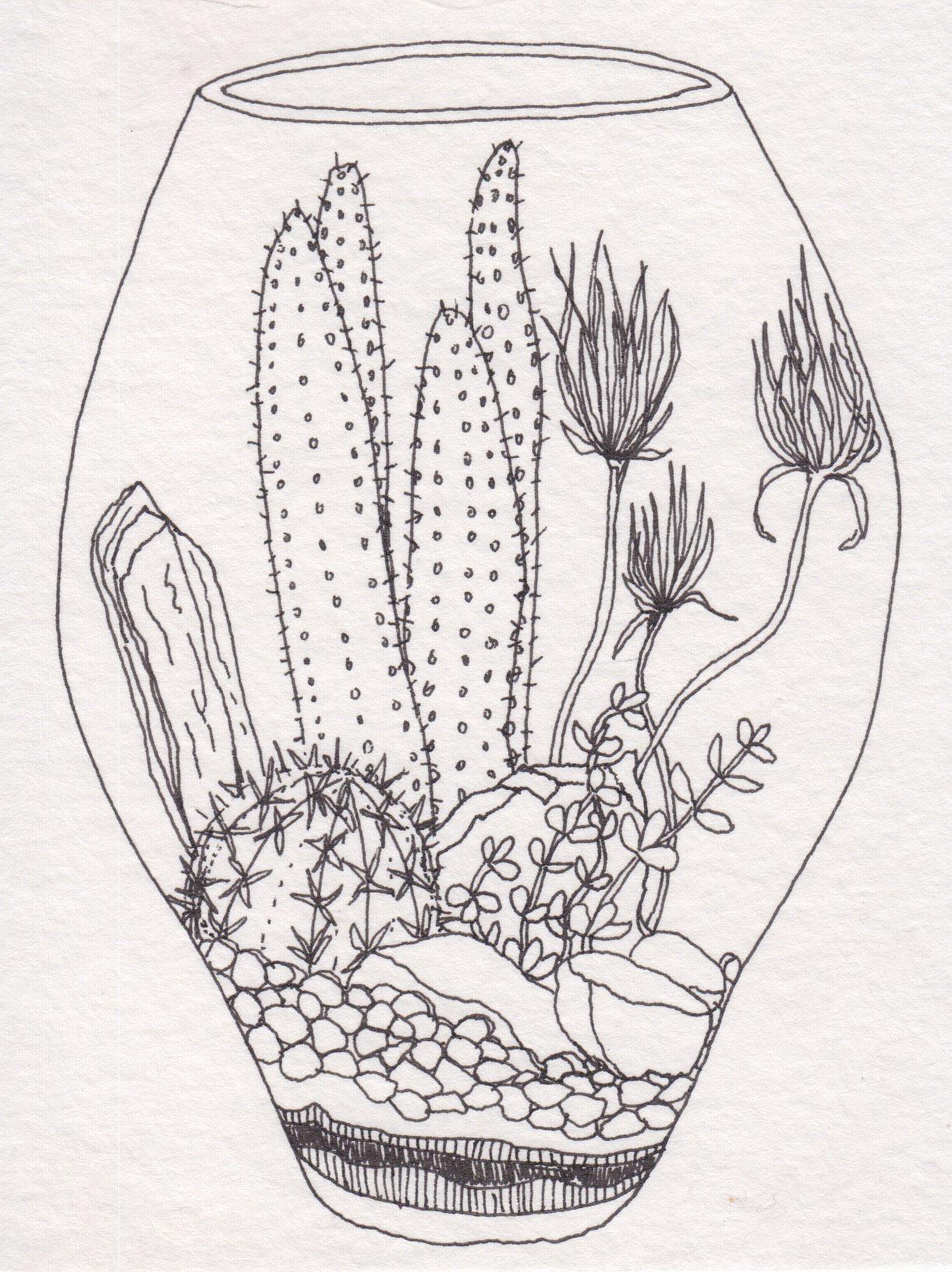 Dunn_Terrarium Drawing_21.jpg