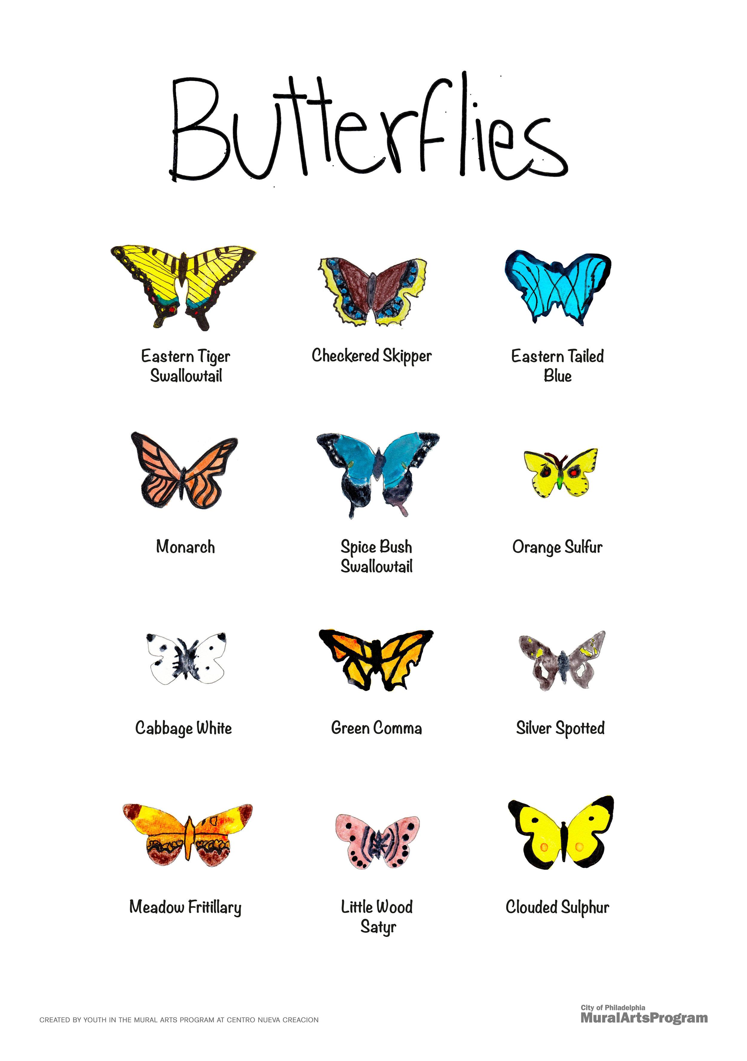 Butterflies_poster_11x17.jpg