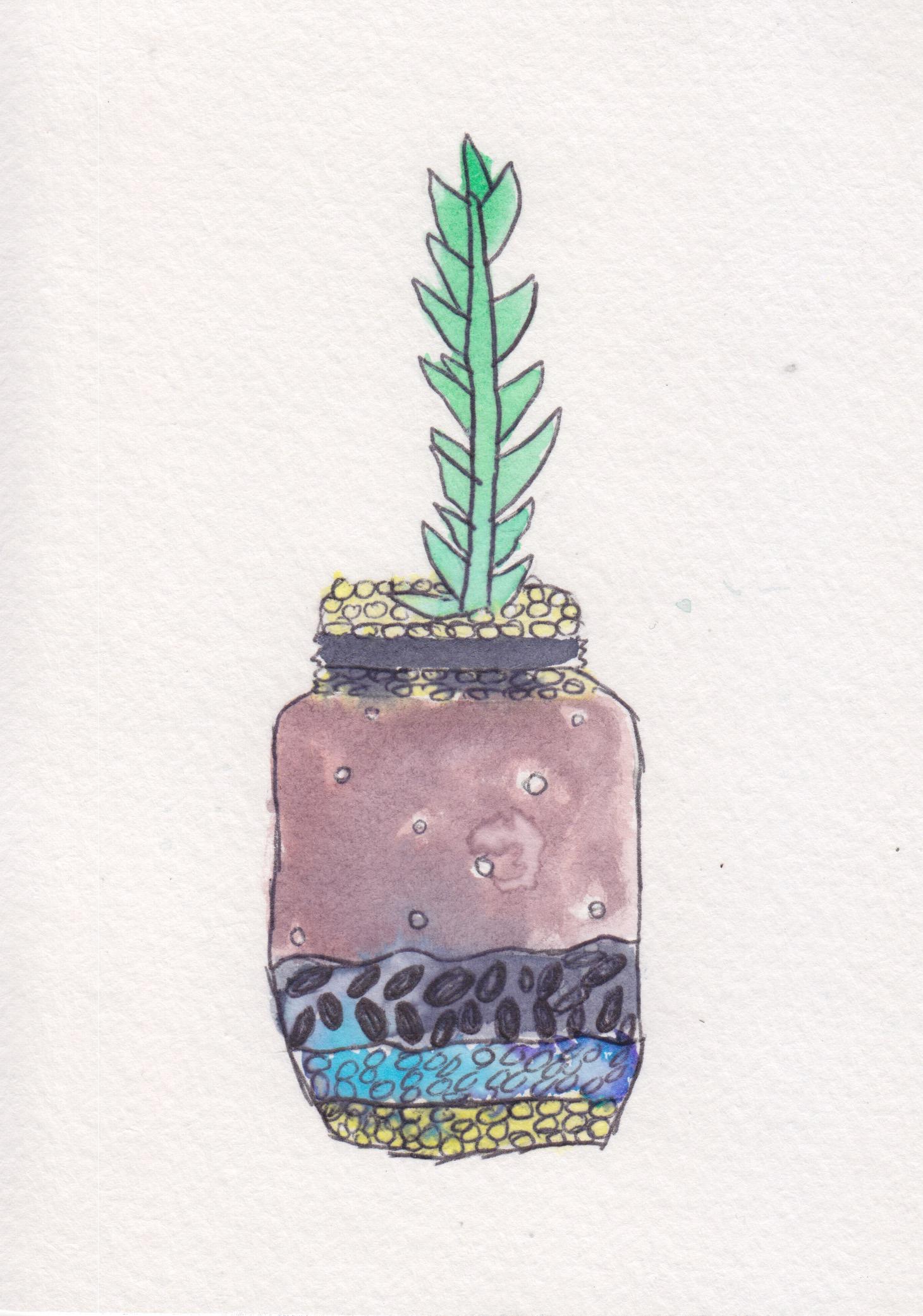 centro_watercolor terrarium_NicoleSaez02.jpeg