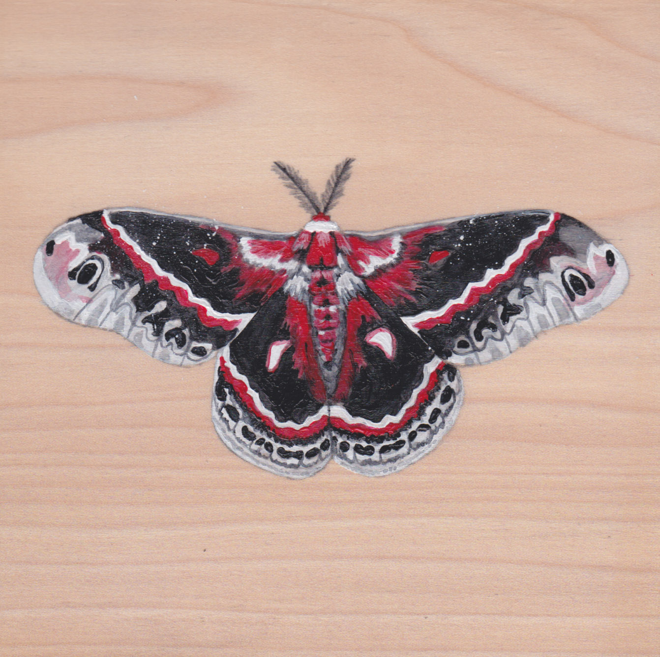 Hyalophora Cecropia Butterfly_Painting on wood_01.jpg