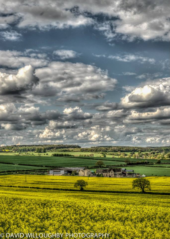 Fields of gold David Willoughby Witney Photography.jpg
