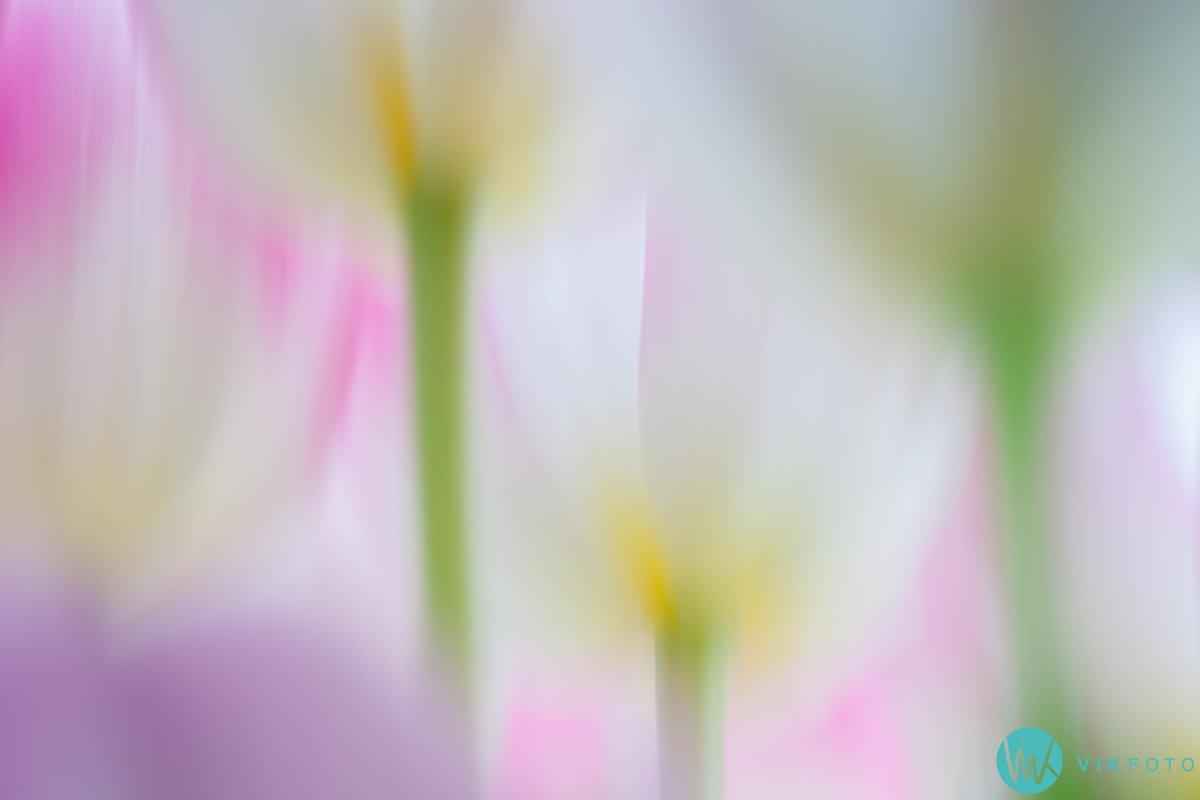 tulipan-bilde-blomst-kreativ-foto-teknikk.jpg