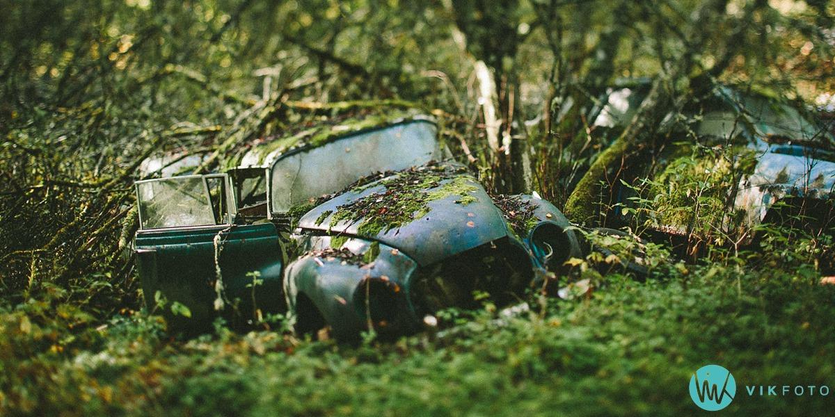 14-vikfoto-bilkirkegård-bilvrak-vrakpant-rusten-bil