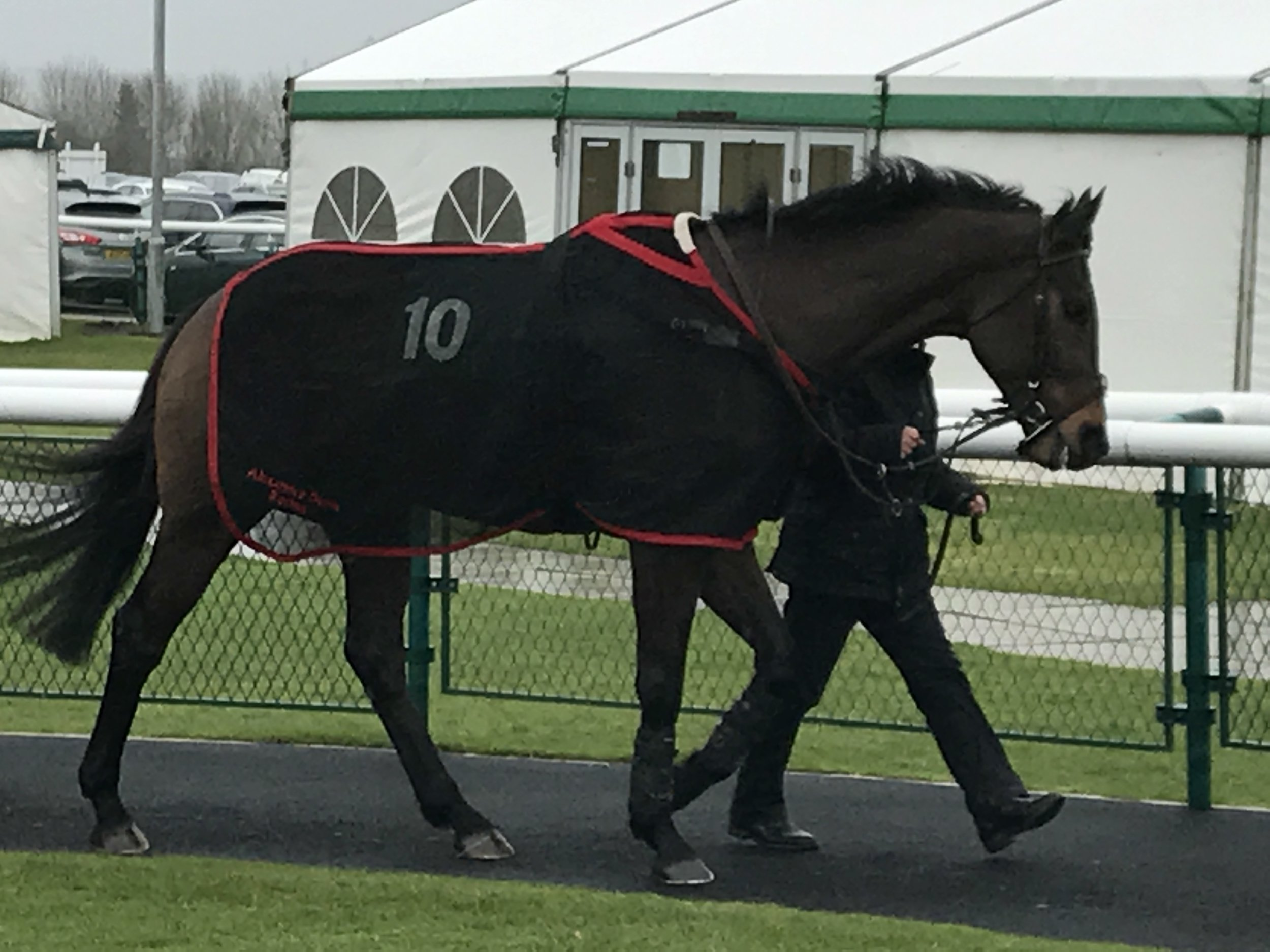 Minella Voucher in the paddock at a Towcester.