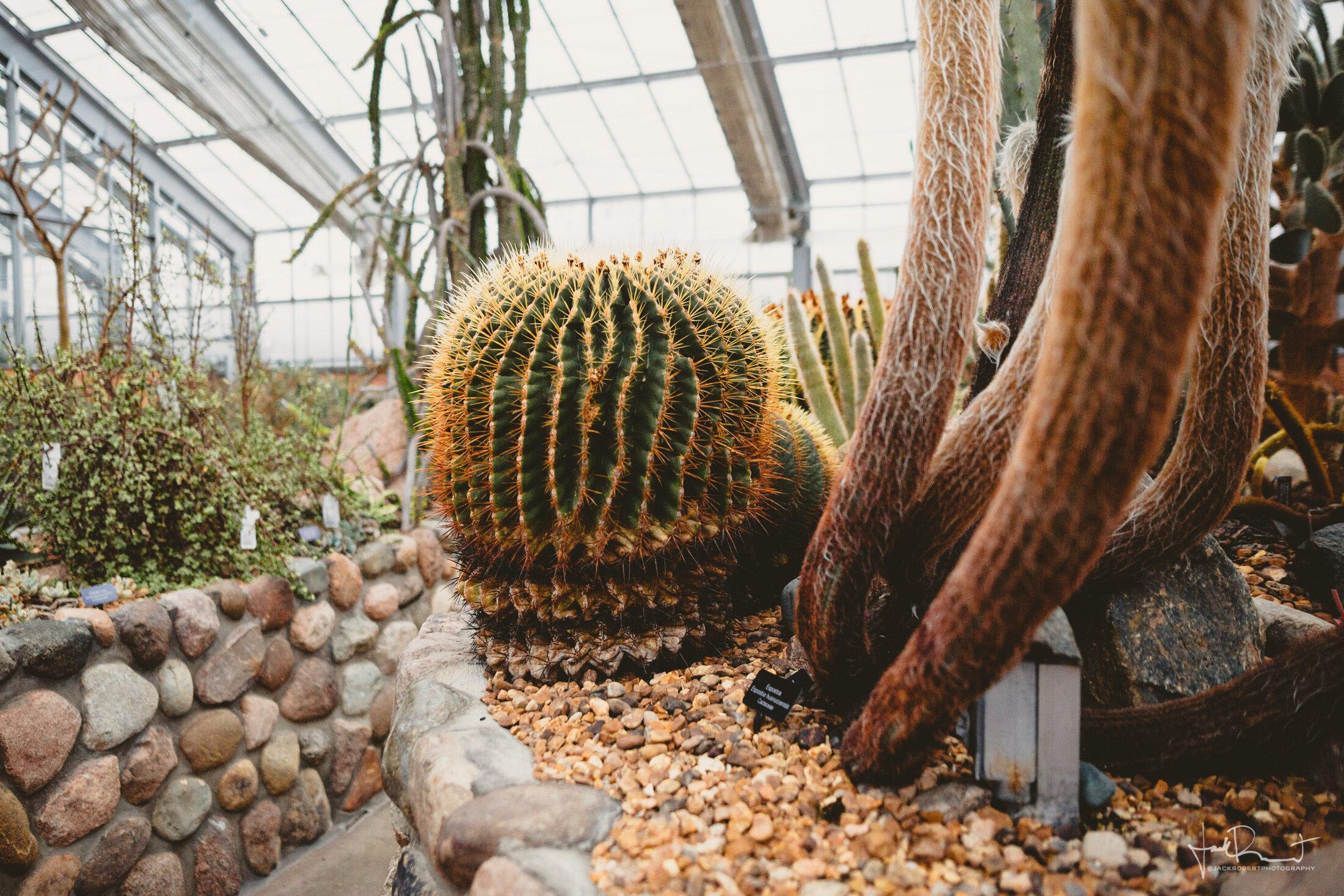 Greenhouse Conservatory Engagement Session - University of Michigan Matthaei Botanical Gardens - Jack Robert Photography