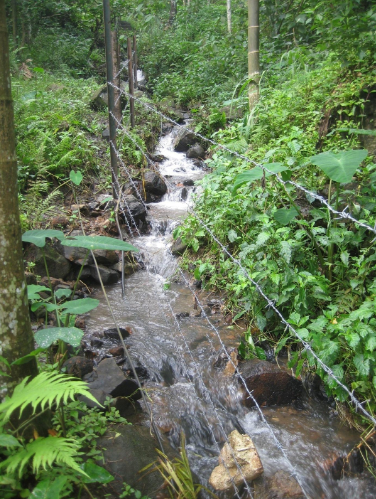 This stream originates in a small patch of forest and supplies water to roughly 20 acres of paddy