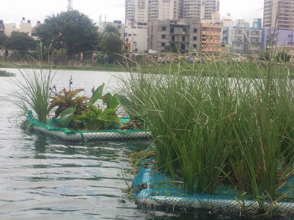 Artificial Floating Islands clean the lake