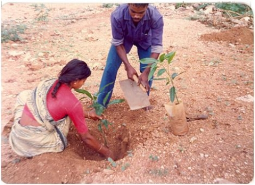 The terrain on which the mini-forest was raised. (Photo: Dr T V Ramachandra)