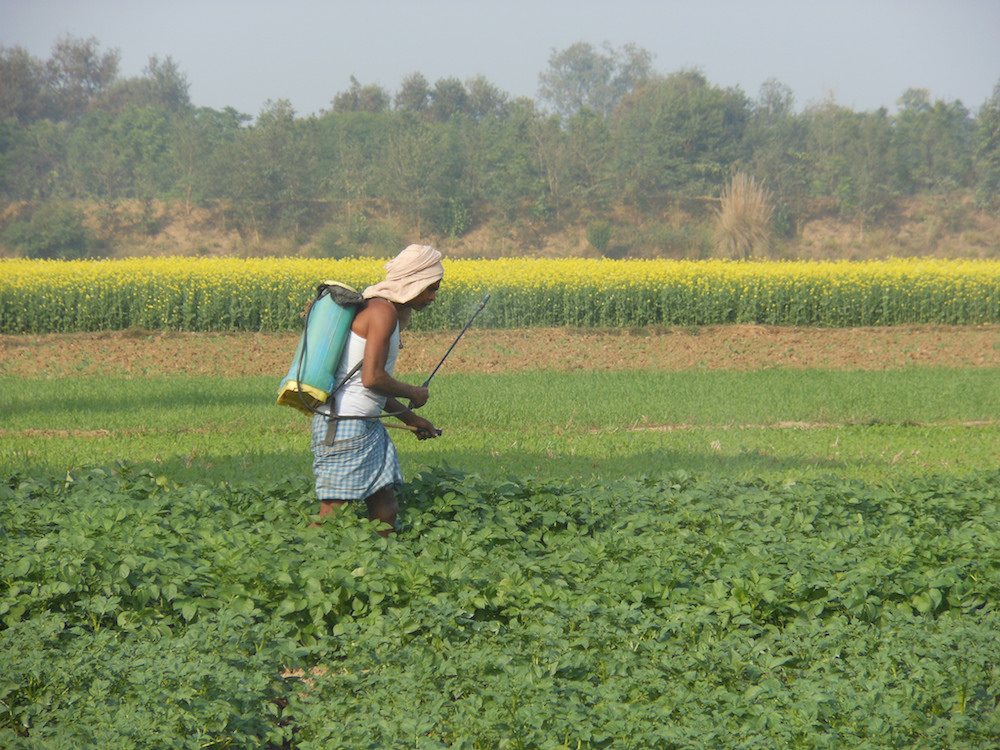 An unprotected farmer sprays pesticides on his farm. Image: Flickr CC/ IFPRI Images