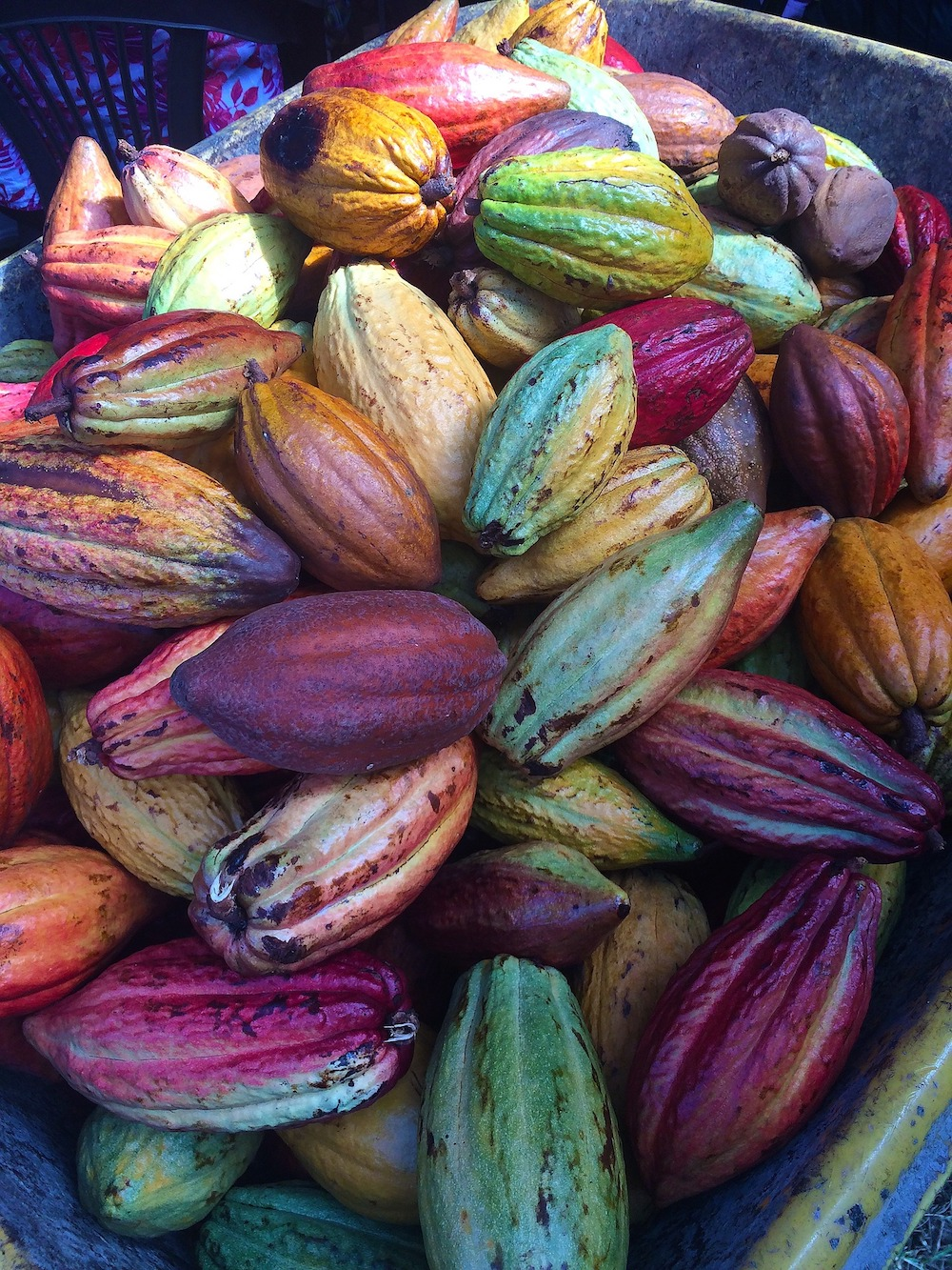 Chocolate, like love and truth, is multiple, says Sethi, about the diverse types of chocolate