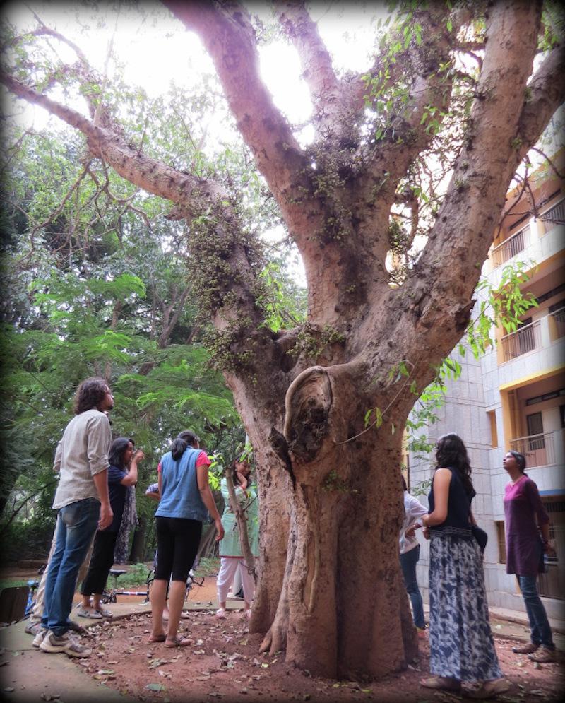 On a fig tree walk with Vignesh Venkateswaran  Source