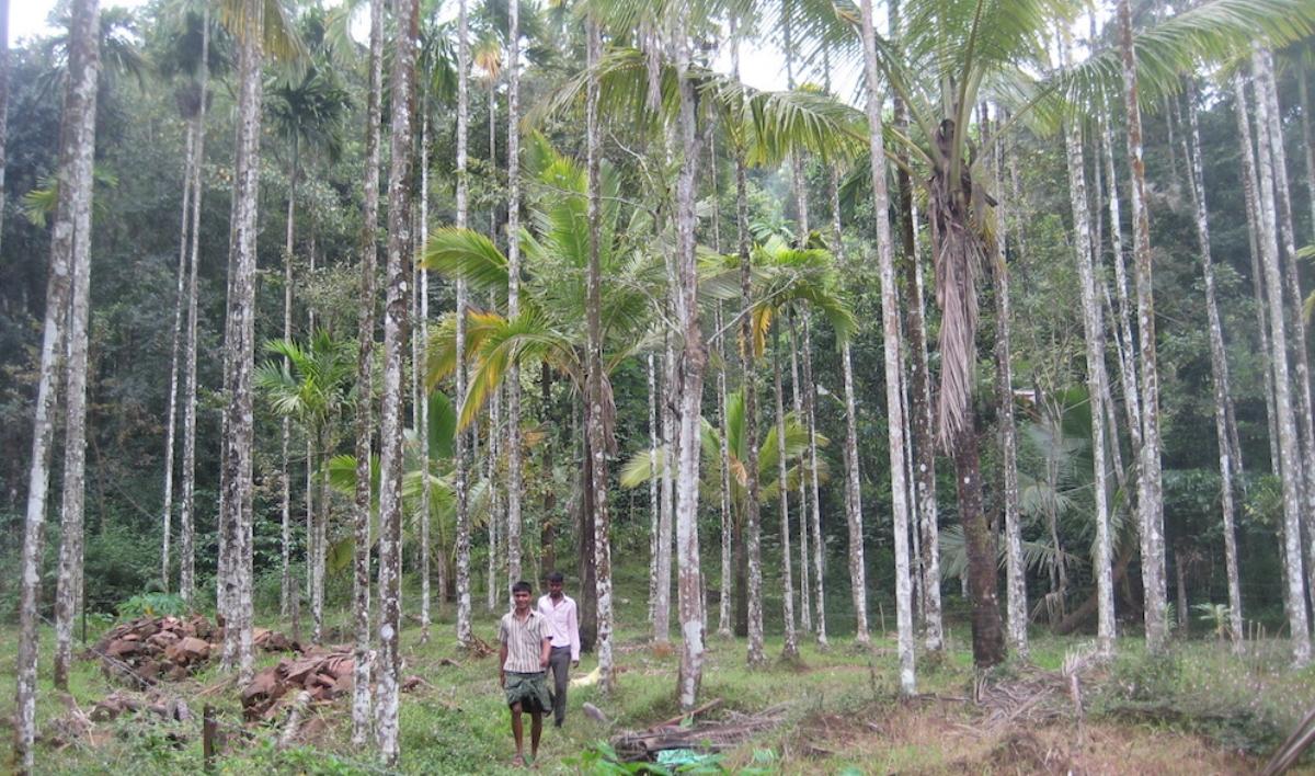 Look beneath the green veneer of monoculture plantations
