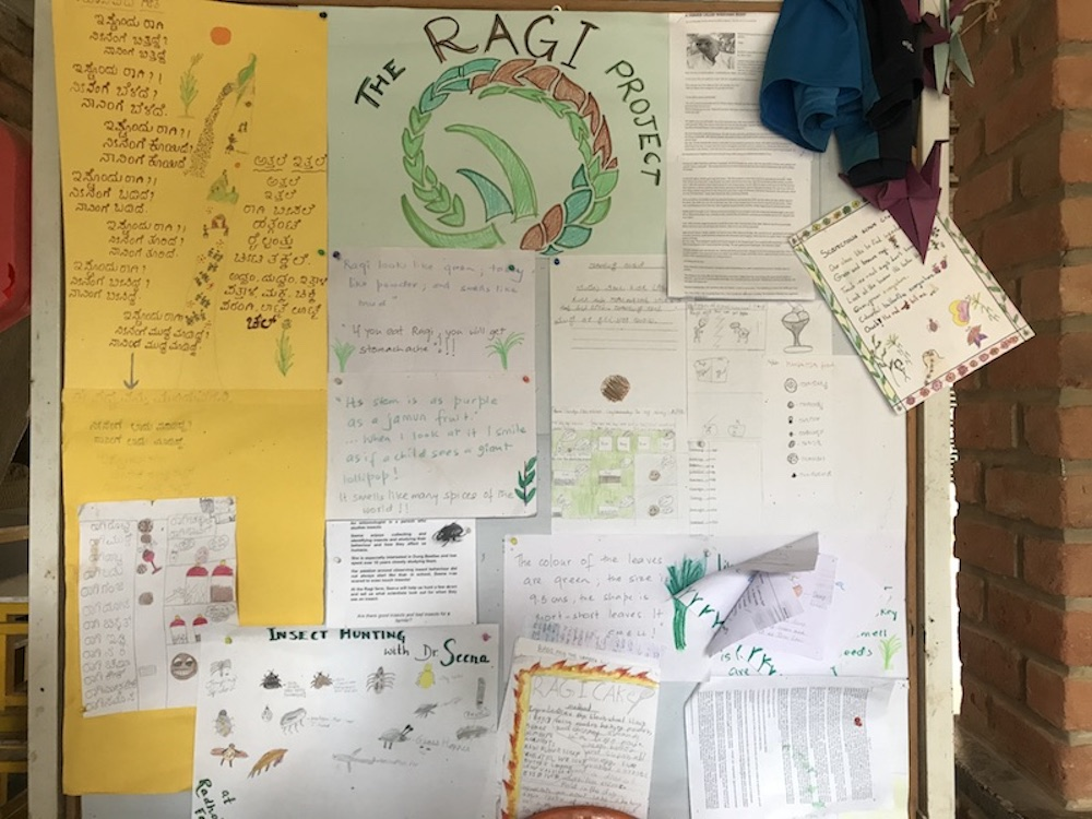 A notice board displays students' learning from The Ragi Project