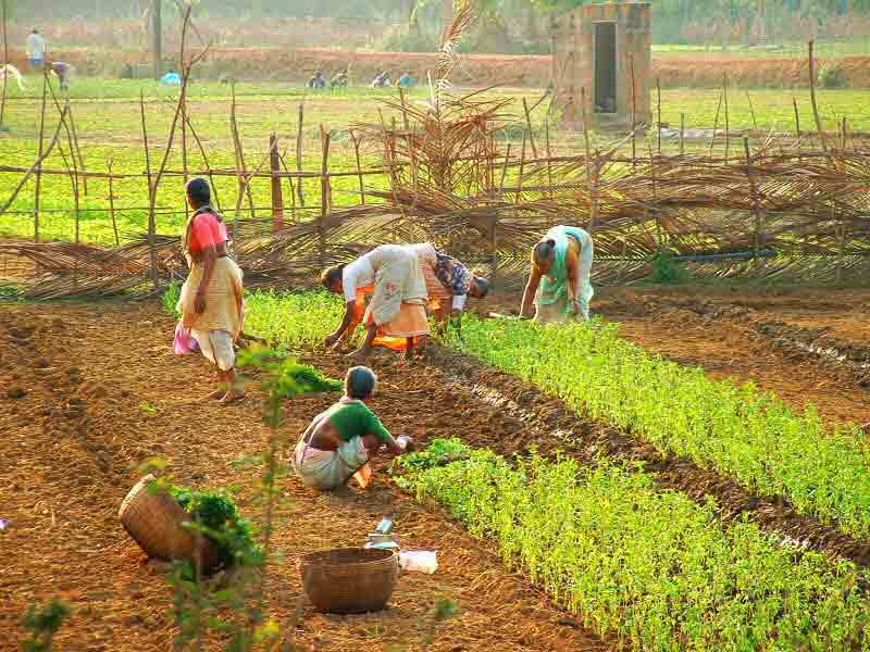 Rural farm women are the custodians of seeds and generations of knowledge about ecological agriculture.  Source