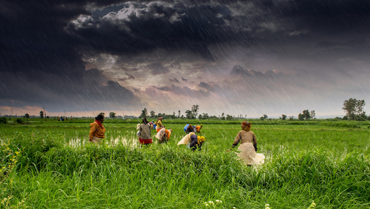 The downward pressure of cheap food falls on the person who is actually producing it:the farmer. Image: Rajarshi Mitra/ Flickr  CC BY 2.0
