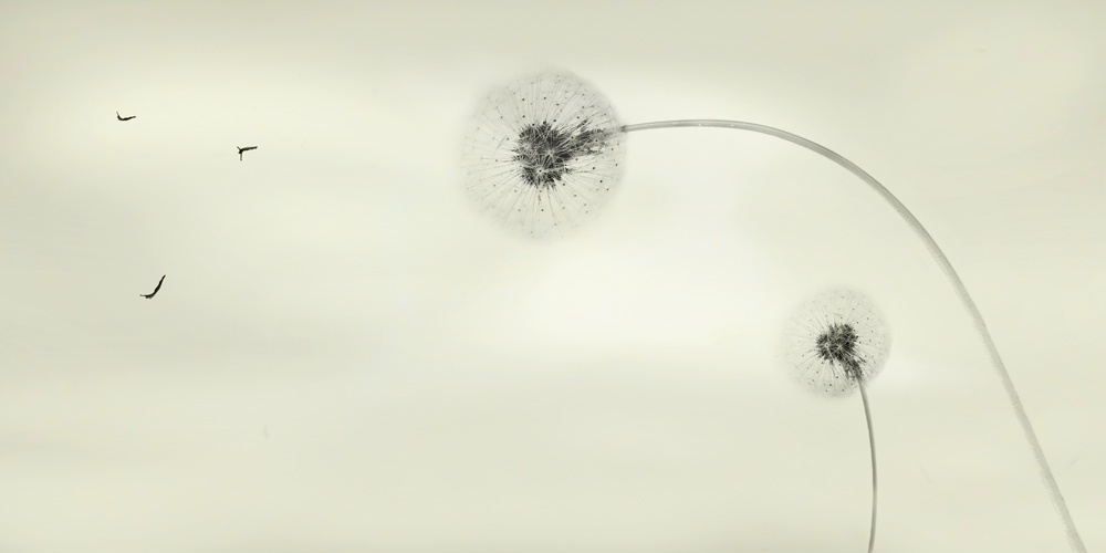 skybound+small+file.jpg