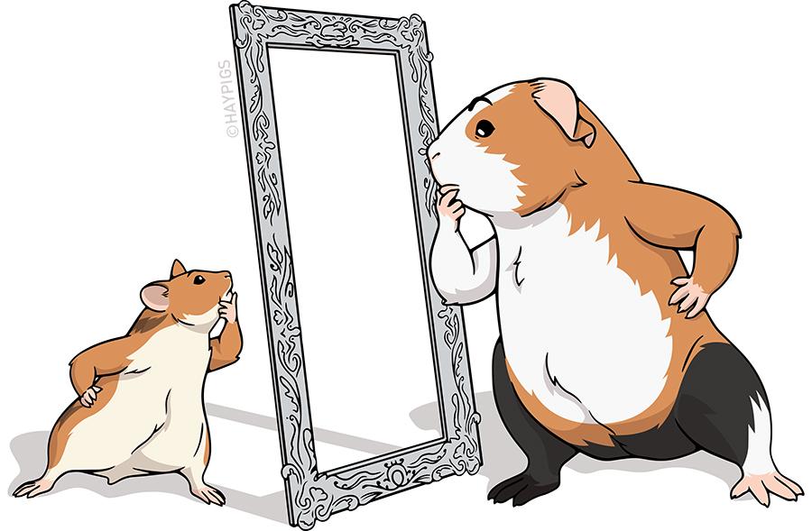 Guinea Pig Guide — HayPigs!® | Guinea Pig Circus — Blog