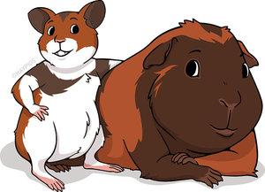 guinea pig Telif Hakkı © 2019 HayPigs Limited.  Tüm hakları Saklıdır.