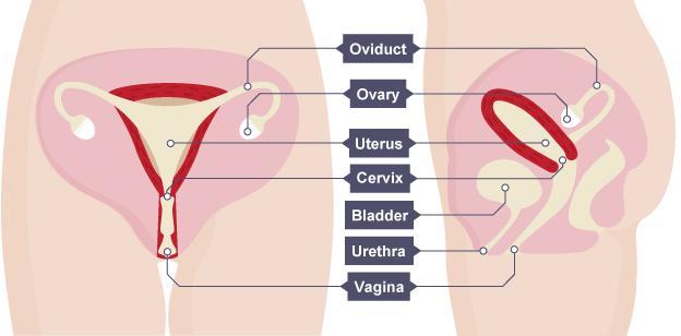 Cervix beautiful BEAUTIFUL CERVIX