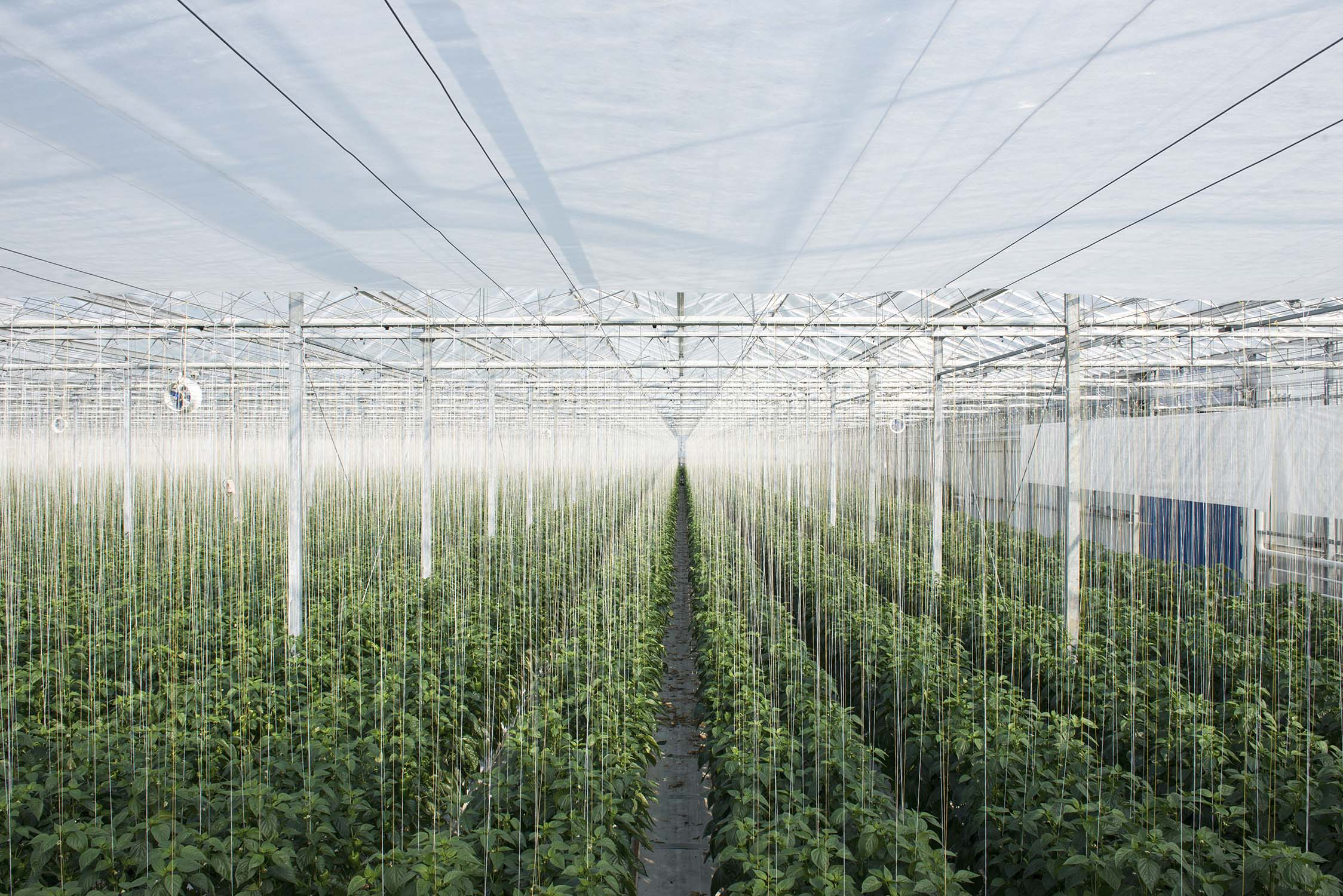 HOLLAND_GREENHOUSE_3.jpg