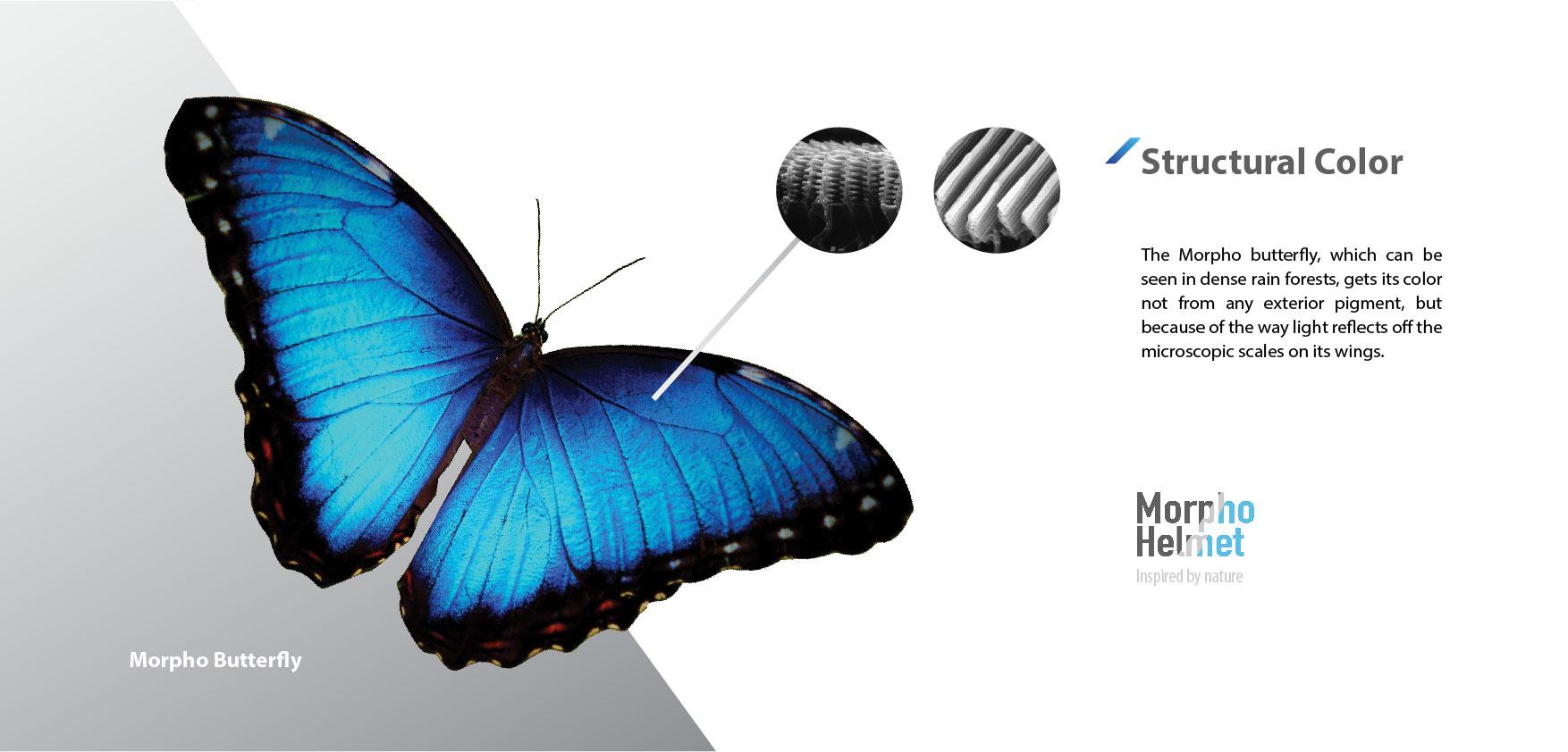 Morpho_portfolio-01.jpg