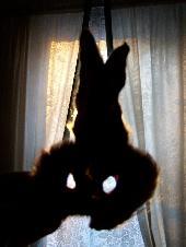 170_hares_ear.jpg