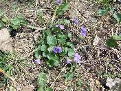 176_Purple_flowers.JPG