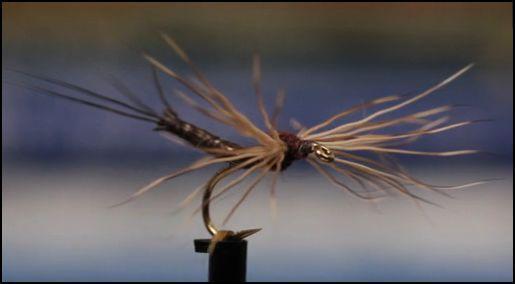 Isonychia Spinner tied by Matt Grober