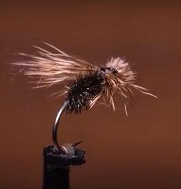 BPS Spent Caddis tied develped by Denis Komatsu and tied by Tim Flagler