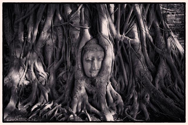 buddhatree.jpg