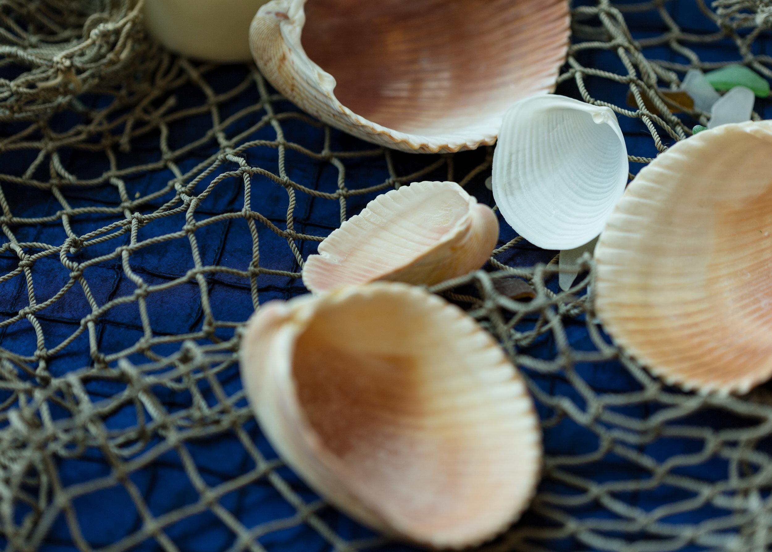 Galveston Island Seashells