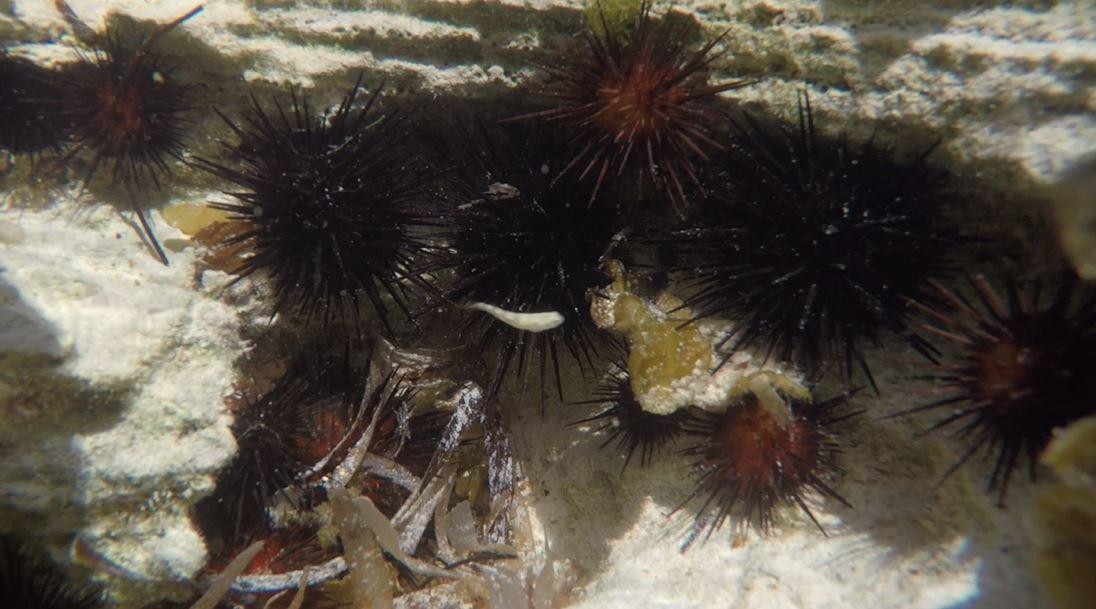 Crossing Rocks Beach Sea Urchins