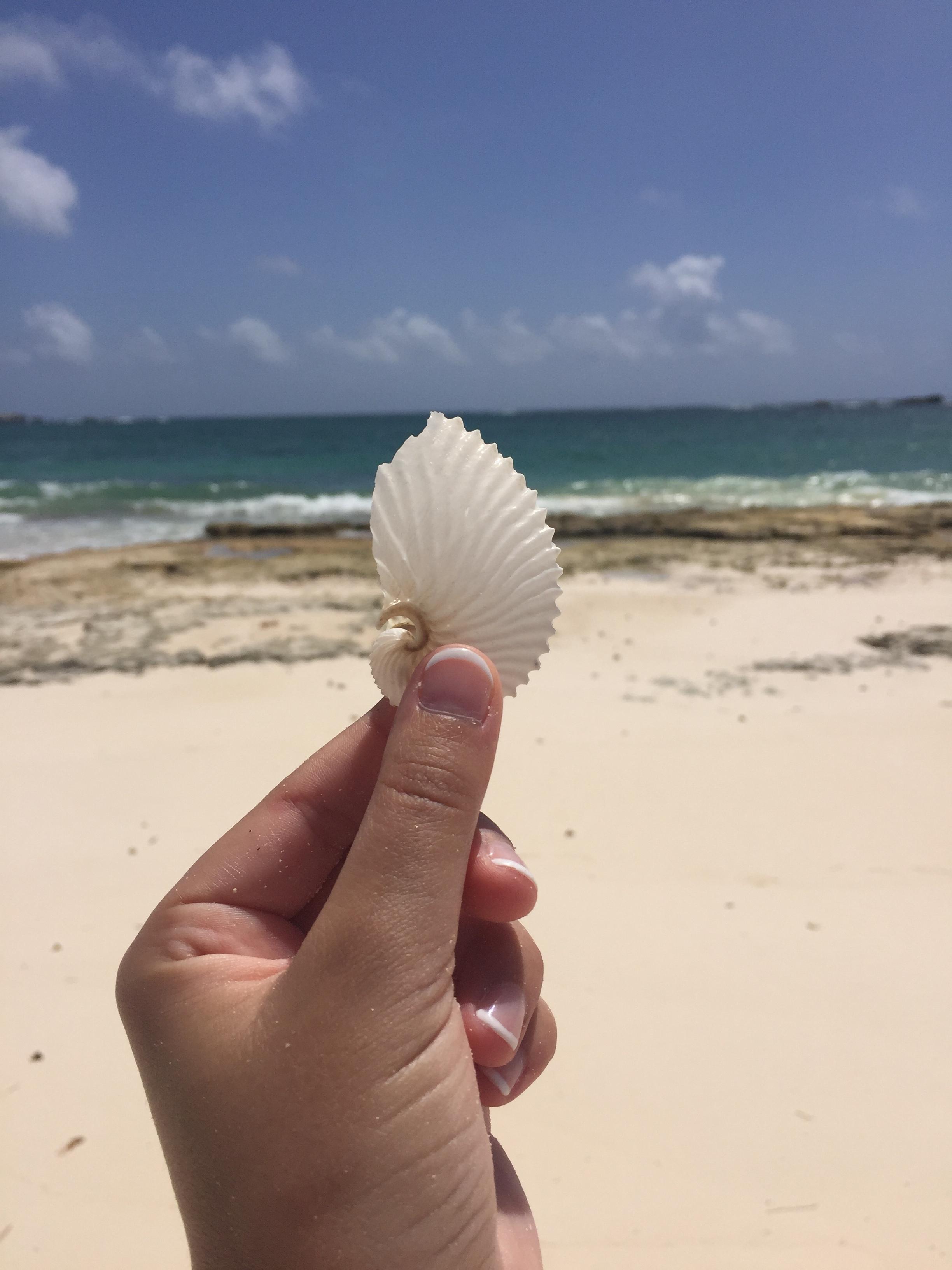 Crossing Rocks Beach Paper Nautilus
