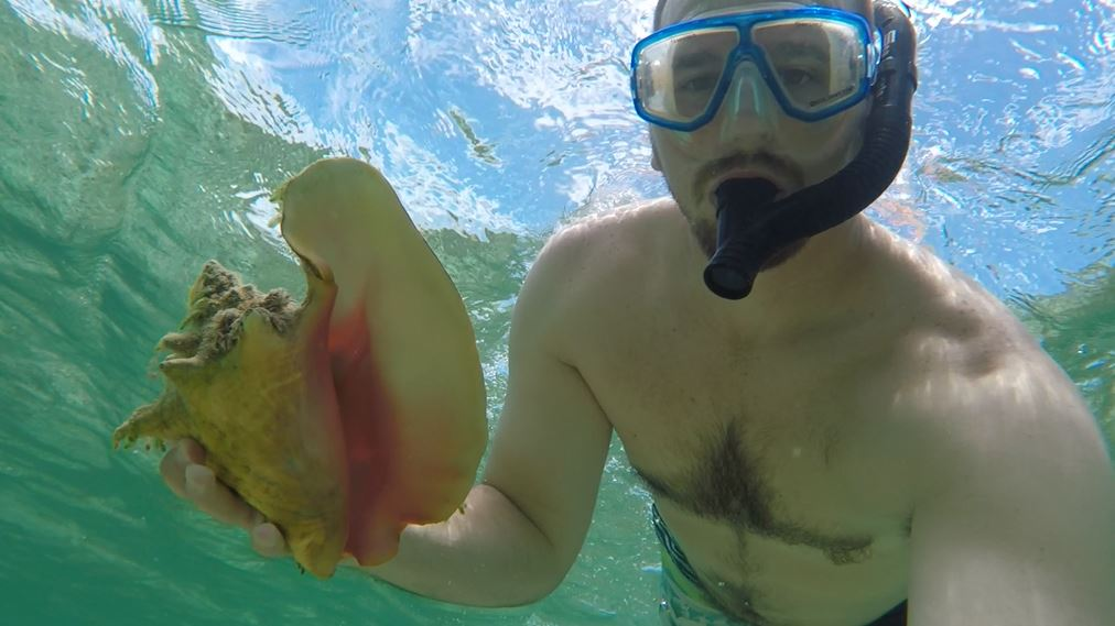 Elbow Cay Conch
