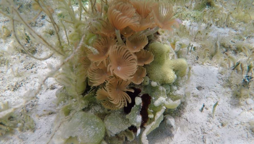 Elbow Cay Marine Life