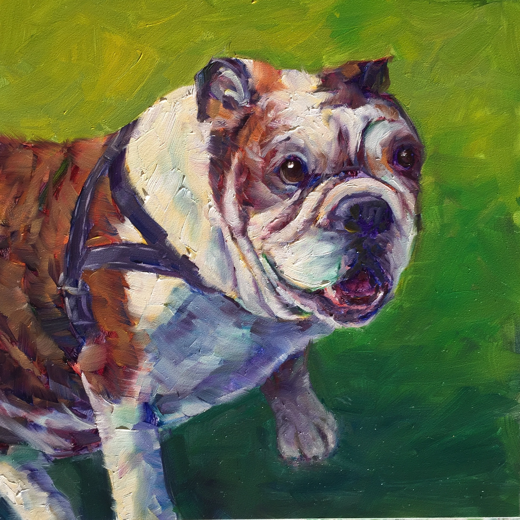 Bulldog #2