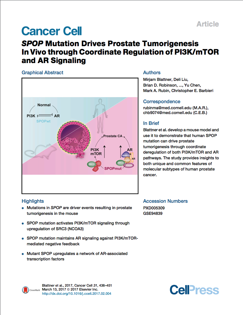 SPOP Mutation Drives Prostate Tumorigenesis.png